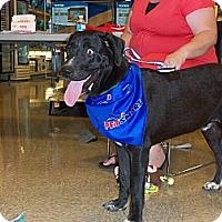 Adopt A Pet :: Ozzi - Silver Lake, WI