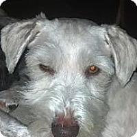 Adopt A Pet :: Prince - Crystal River, FL