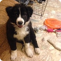 Adopt A Pet :: Cowboy - Hazard, KY