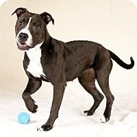 Adopt A Pet :: Alana - Chicago, IL