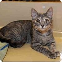 Adopt A Pet :: Bam Bam - Farmingdale, NY