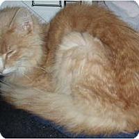 Adopt A Pet :: Sammy - Westfield, MA