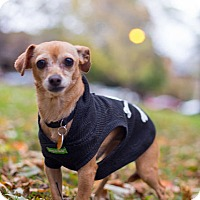 Adopt A Pet :: Bitty - Chicago, IL