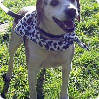Adopt A Pet :: Henry - Crescent City, CA