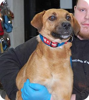 Shepherd (Unknown Type) Mix Dog for adoption in Brooklyn, New York - Dobby