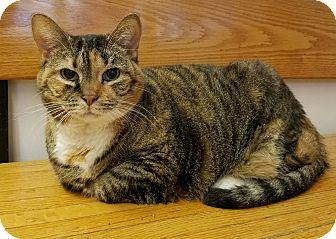 Domestic Shorthair Cat for adoption in Elyria, Ohio - Mishka