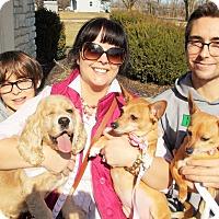 Adopt A Pet :: Rosie - Plain City, OH