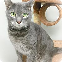 Adopt A Pet :: Maurice - Webster, MA