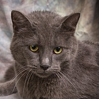 Adopt A Pet :: ZIVA - Anna, IL