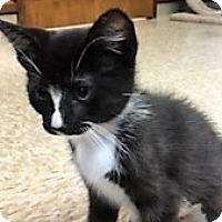 Adopt A Pet :: Donkey - Medina, OH