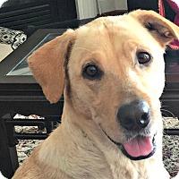 Adopt A Pet :: Daisy Sue - Durham, NC