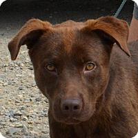 Adopt A Pet :: Tater - Sturbridge, MA
