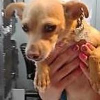 Adopt A Pet :: Hodgin - Rio Rancho, NM