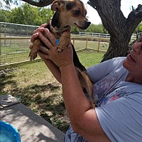 Adopt A Pet :: Twinkle - Brownsville, TX