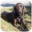 Photo 1 - Labrador Retriever/Hound (Unknown Type) Mix Dog for adoption in Cumming, Georgia - Hud