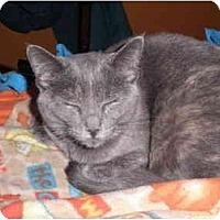 Adopt A Pet :: Glitter - Warren, MI