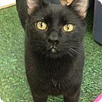 Adopt A Pet :: Minet - Chandler, AZ