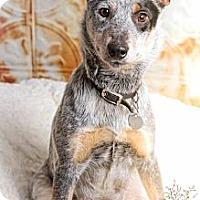 Adopt A Pet :: Bobbi - Chattanooga, TN