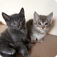 Adopt A Pet :: Miles & Mason - Arlington, VA