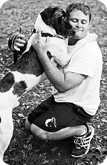 Great Dane/Pointer Mix Dog for adoption in Savannah, Georgia - Swartz