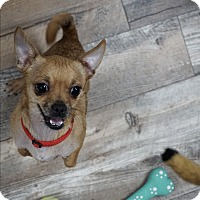 Adopt A Pet :: Chip - Muskegon, MI