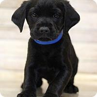 Adopt A Pet :: Kadbara - Waldorf, MD