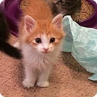 Adopt A Pet :: Sparky - La puente, CA