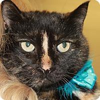 Adopt A Pet :: PETUNIA - Clayton, NJ