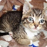 Adopt A Pet :: Astrid - Lebanon, PA