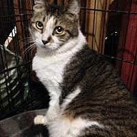 Adopt A Pet :: KELLY - Ridge, NY