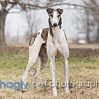 Adopt A Pet :: Deere - Dallas, TX