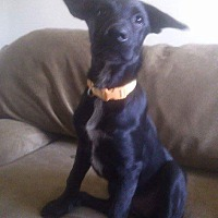 Adopt A Pet :: Ebony - San Diego, CA