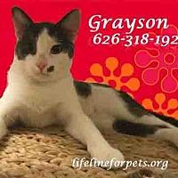 Adopt A Pet :: A Fun Boy: GRAYSON (& Braelyn) - Monrovia, CA