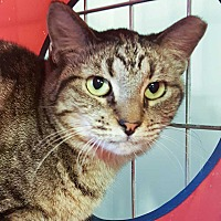 Adopt A Pet :: Heidi - McPherson, KS