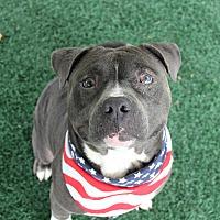Adopt A Pet :: Bear - San Diego, CA