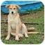 Photo 4 - Labrador Retriever Mix Dog for adoption in Plainfield, Connecticut - Nancy...Reduced fee $300