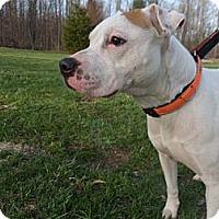 Adopt A Pet :: Libby - Norwich, NY