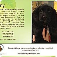 Adopt A Pet :: Ebony - Ottawa, ON