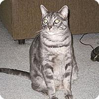 Adopt A Pet :: Captain - Laguna Woods, CA