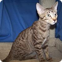 Adopt A Pet :: K-Carla3-Greg - Colorado Springs, CO