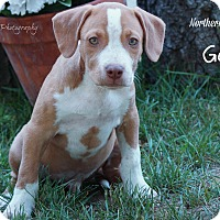 Adopt A Pet :: Galileo - Southington, CT