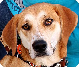 Coonhound (Unknown Type) Mix Dog for adoption in Hopkinsville, Kentucky - Jake
