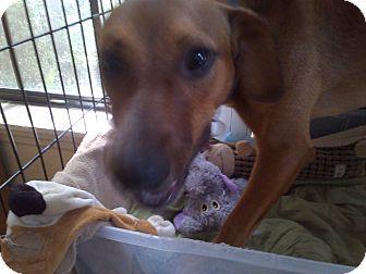 Labrador Retriever/Terrier (Unknown Type, Medium) Mix Dog for adoption in Martinez, Georgia - Kaitlyn