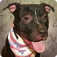 Adopt A Pet :: Rocko - Cincinnati, OH