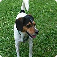 Adopt A Pet :: Banjo - West Allis, WI