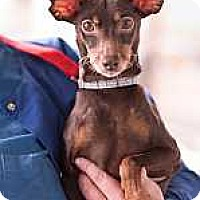 Adopt A Pet :: Mocha - Syracuse, NY