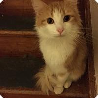 Adopt A Pet :: Manfred - Delmont, PA