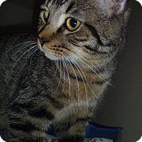 Adopt A Pet :: Buster - Hamburg, NY