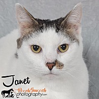 Adopt A Pet :: Janet - Broadway, NJ
