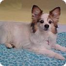 Adopt A Pet :: Jasper - 10 lbs